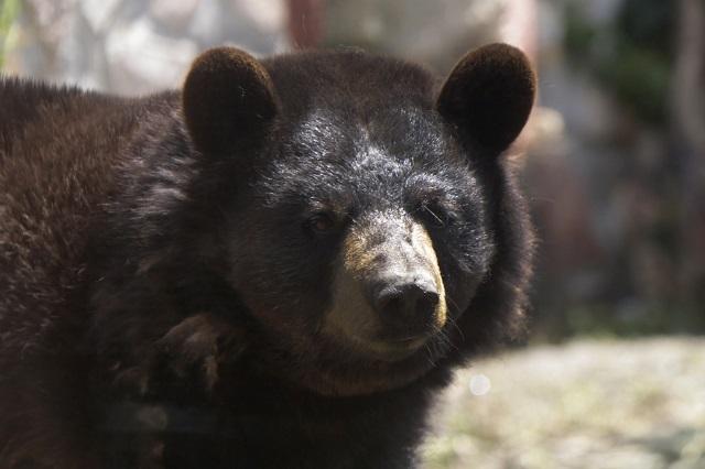Mujer y su bebé mueren víctimas del ataque de un oso