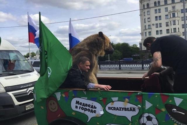 Un oso irrumpió en el festejo de Rusia frente a Arabia Saudita