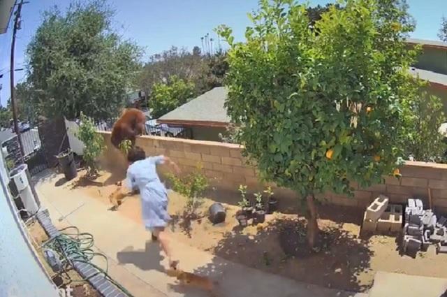 Video: Mujer enfrenta a oso para salvar a sus perritos