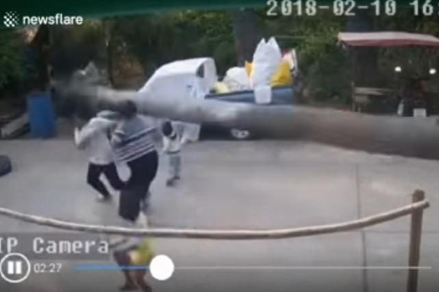 Niño se salva por centímetros de morir aplastado por una palmera