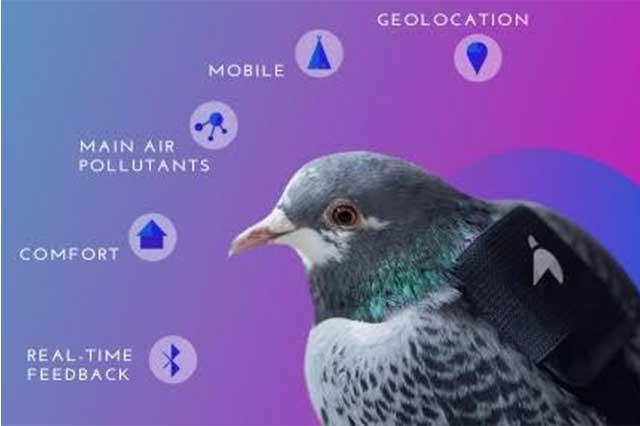 Usan palomas en Londres para medir calidad del aire