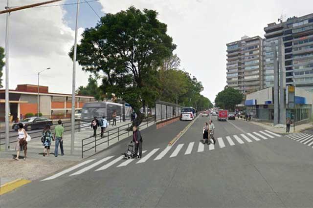 Afectará 436 árboles el trazo de la línea 3 del Metrobús