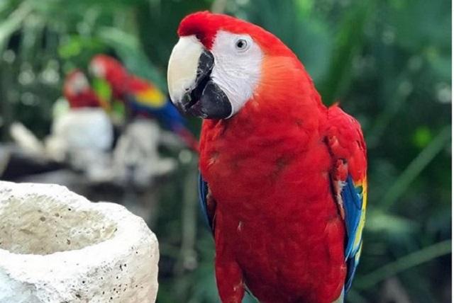 Parque Xavage, aventura extrema que puedes vivir en Cancún