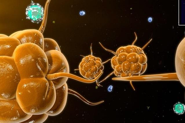 Crean sistema para detectar 280 patógenos de forma rápida