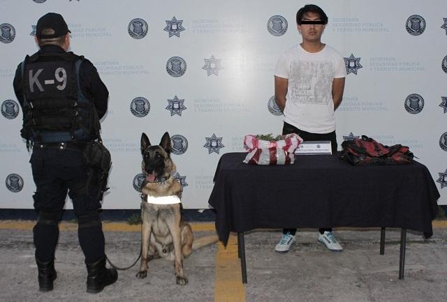 Valoran restauranteros adquirir perros entrenados para seguridad