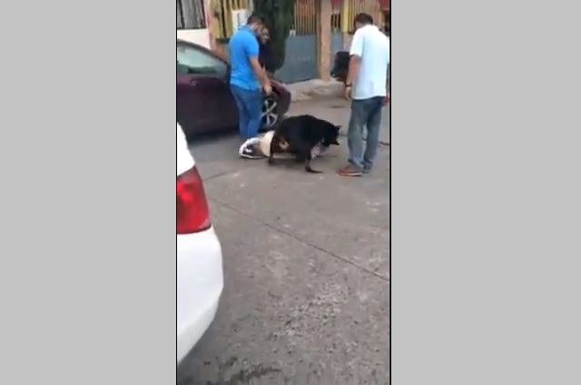 Exhiben tenencia irresponsable de un Rottweiler en Teziutlán
