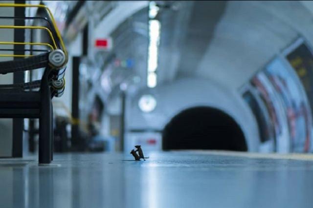 Ratones peleando en el metro es reconocida como 'Foto del año'