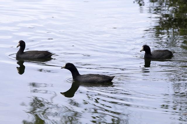 Peligra la migración de las aves, mira la razón