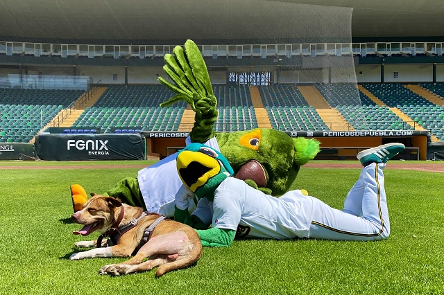 Foto: Twitter / @Pericos_Oficial