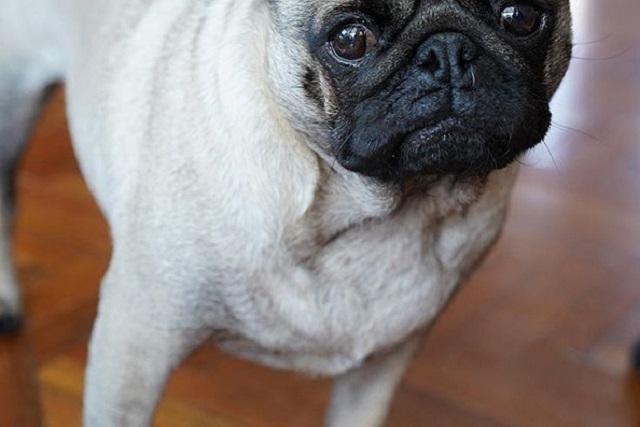 Confiscan perra por deuda, la venden y los acusan de fraude