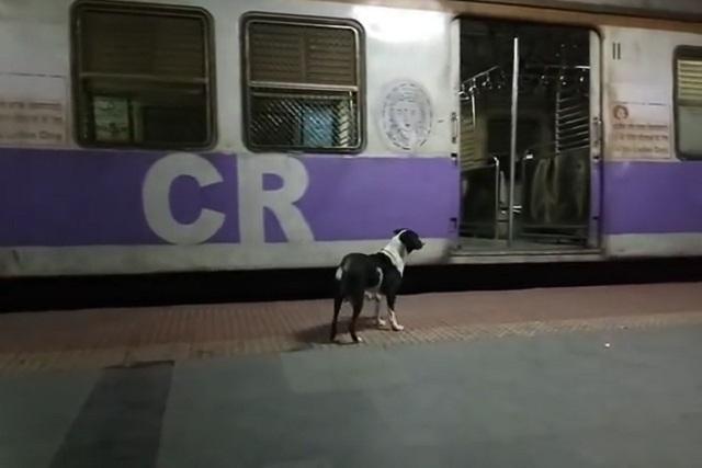 VIDEO: Perra espera todos días a una mujer en estación de tren y ella no llega