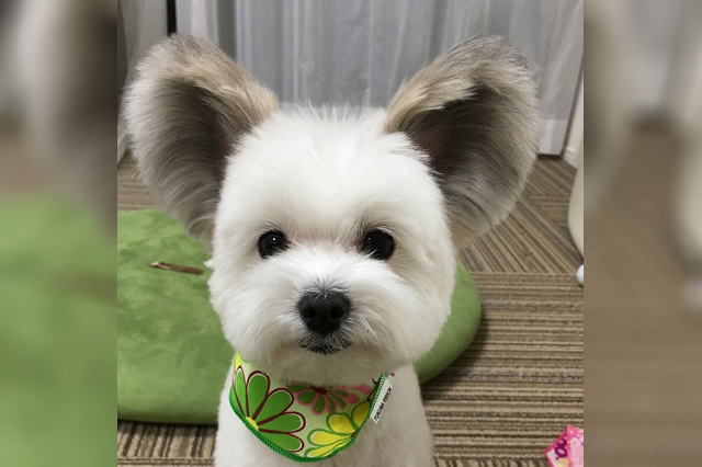 La gente en Internet está obsesionada con este perrito
