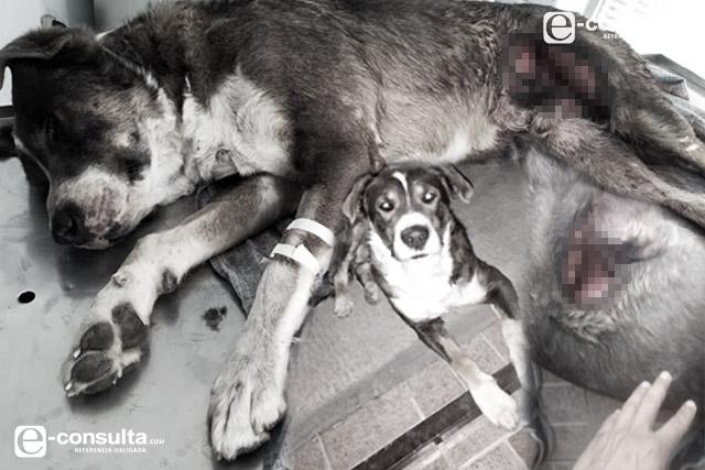 Gaseros amarraron y arrastraron a un perro en Puebla