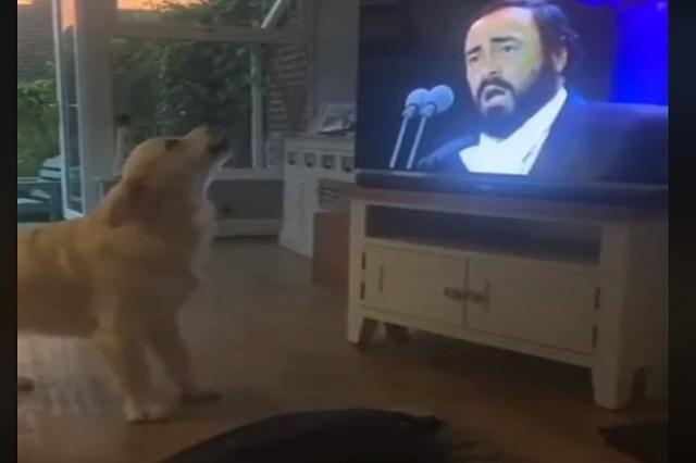 Video: la adorable reacción de un perro al escuchar a Pavarotti