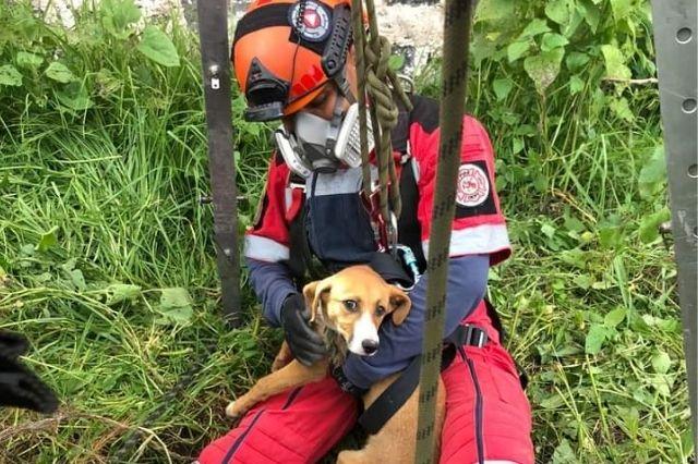 Rescatan a perrito que cayó a un pozo en Cholula