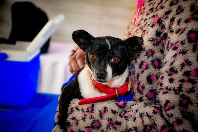 En Cuautlancingo, reglamento para cuidado responsable de mascotas