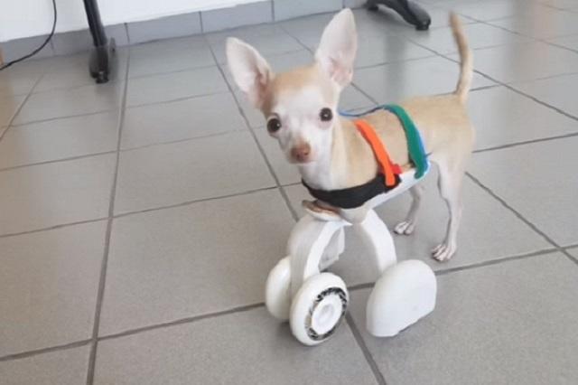 Crean primera prótesis en impresión 3D para perritos discapacitados