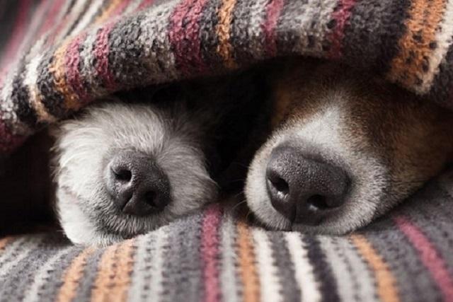 Las mascotas también pasan frio. Cuídalas con estos consejos
