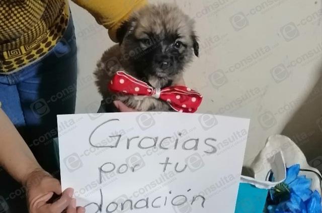 Organizan colecta de alimento para perros en Zacapoaxtla