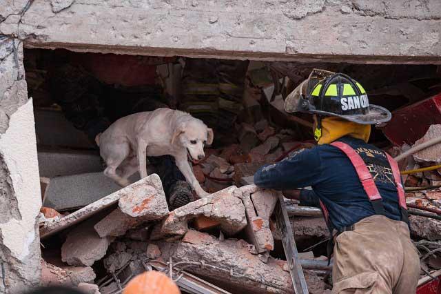 6 perros de la UNAM que ayudan a rescatar vidas, como en sismo 19S