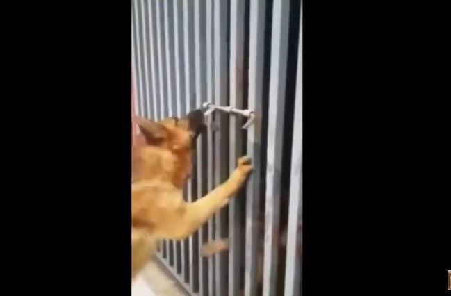 Perro lucha por sacar a su amiga y video muestra sus sucias intenciones