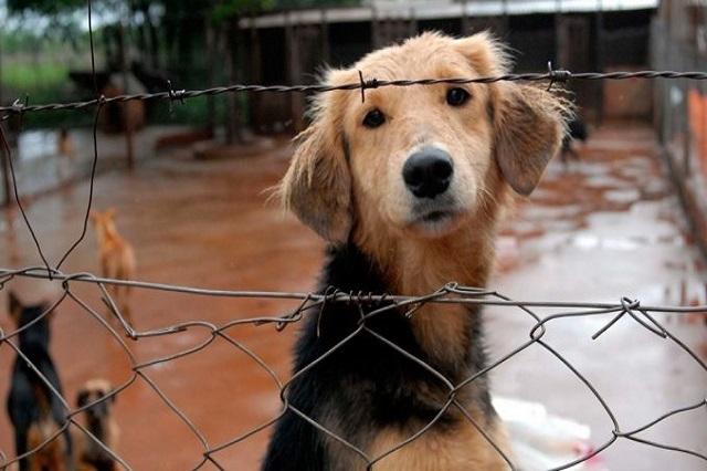 Celebran animalistas poblanos primera prisión por maltrato