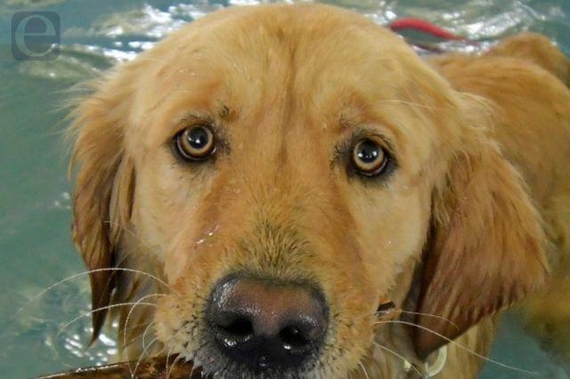 Hombre muere ahogado tras intentar salvar a su perro