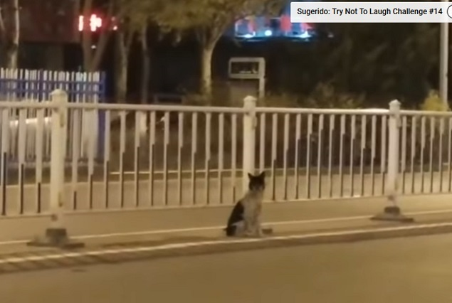 Perro lleva más de 80 días en el lugar donde murió su dueña