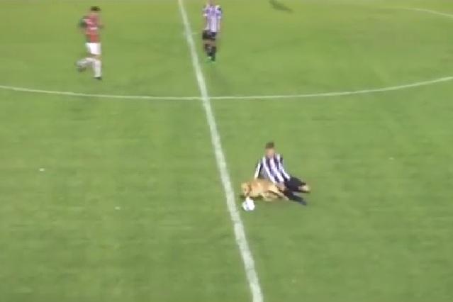 Video viral: Perro interrumpe partido de futbol y derriba a jugador