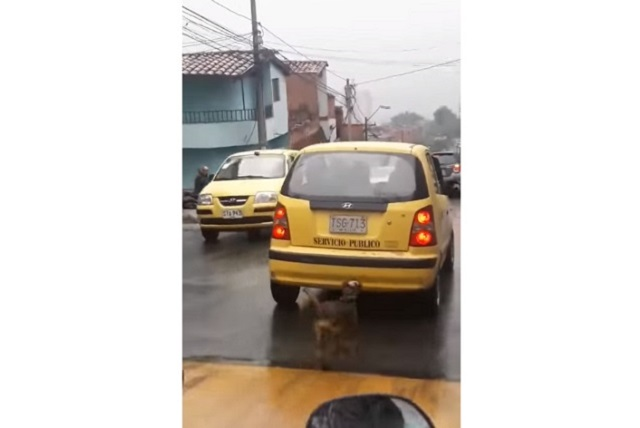 VIDEO Mujer abandona a su perro y huye en taxi