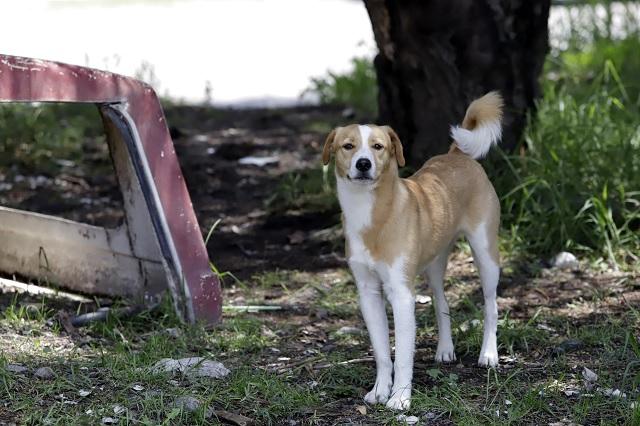 Ya existe vacuna contra el coronavirus para perros