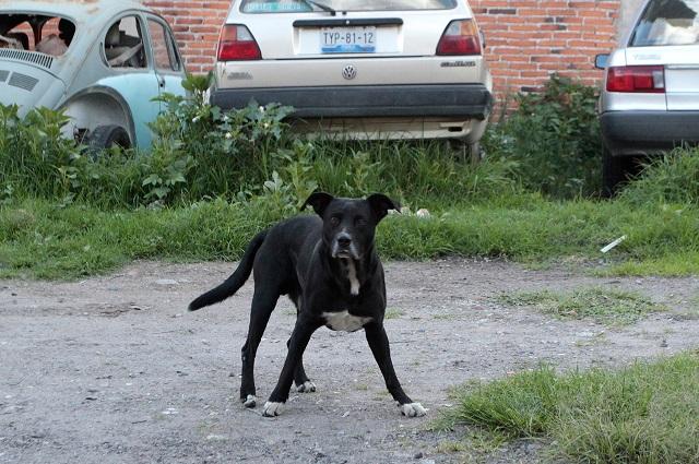 Video: Señor dispara a perro que le ladra en la calle