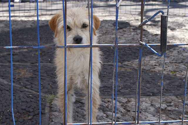 Alertan en Atlixco por ataques a trabajadores de control canino
