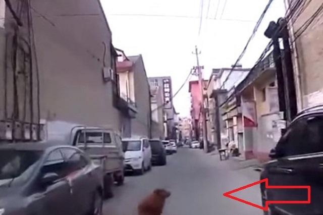 Perro guía a ambulancia hasta su dueño que estaba desmayado