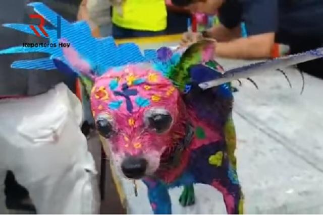 Acusan de maltrato animal a mujer que pintó a su perro de alebrije