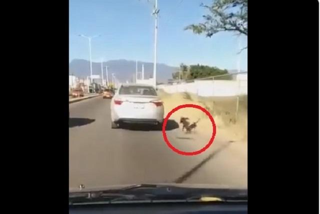 Captan a mujer arrastrando a un perro desde auto en movimiento