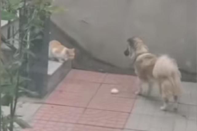 Tras ver a gato hambriento, perro decide compartirle su comida