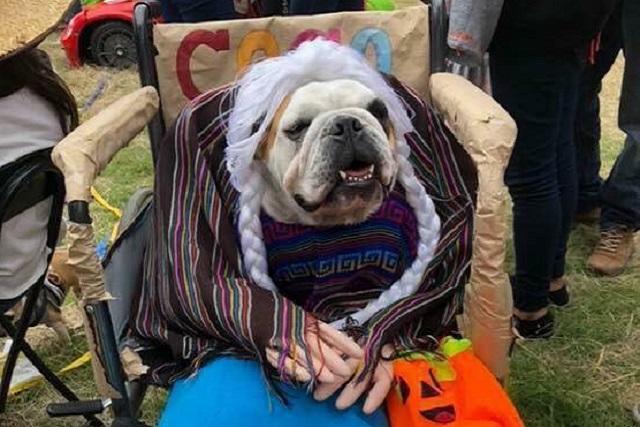 10 perritos que se han robado Halloween con sus disfraces