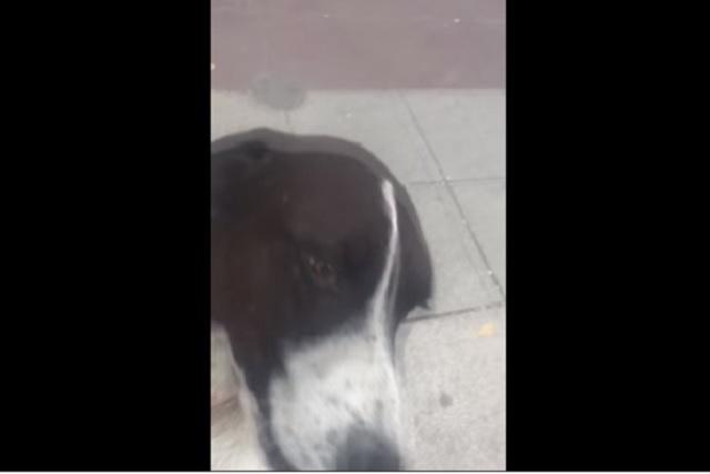 Así reaccionó un perro tras reencontrarse con su dueño después de tres años