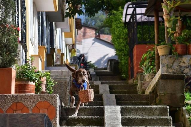 Él es Eros, el perrito colombiano que hace entregas de comida a domicilio