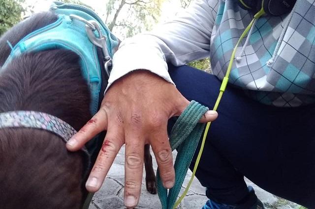 Acusan ataque de pitbull en cerro de San Miguel en Atlixco