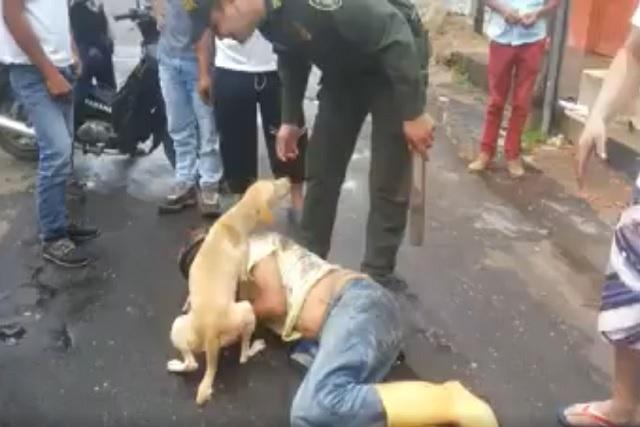 Perro fiel cuida de su dueño ebrio