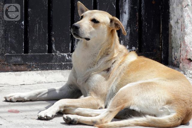 Planean reforma contra sacrificio de animales sin hogar en Puebla