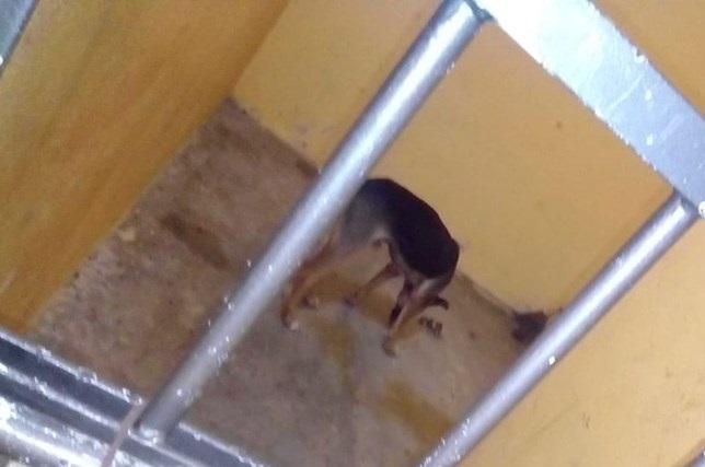Meten a la cárcel sin comida a perro que mordió a una señora