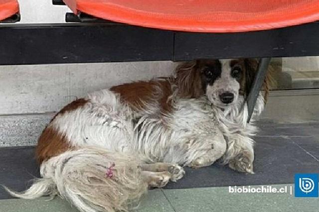 Afuera de un hospital, perro espera a su dueño que murió de paro cardiaco
