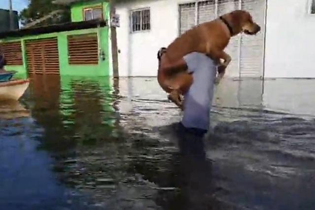 Tu familia nunca te abandona: Joven rescata a su perro en inundación