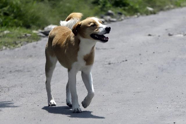 Perros rescatados en Puebla tendrán un hogar en Canadá