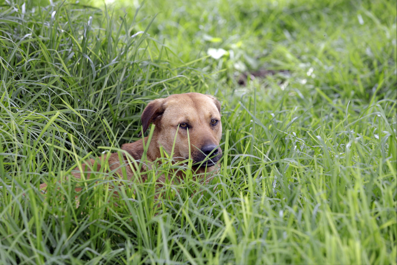 Atlixco actualiza reglamento de tenencia responsable de mascotas