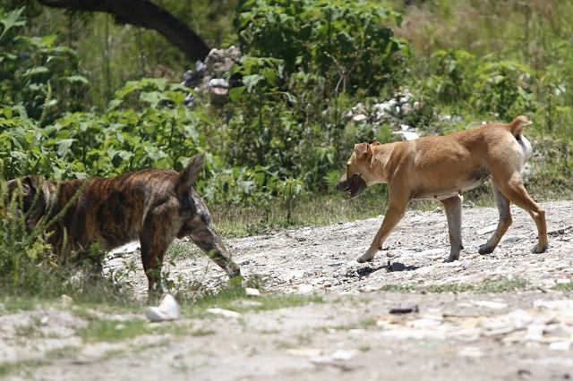 Fiscalía ha iniciado 19 averiguaciones previas por casos de maltrato animal