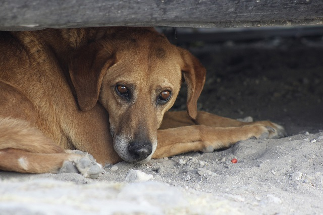 En Acatlán de Osorio incrementa el abandono de mascotas